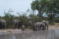 Waterhole, Moremi Game Reserve - Botswana
