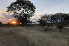 Sundowner, Cawston Wildlife Estate - Zimbabwe