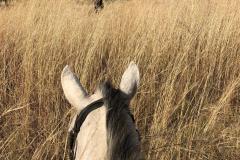 Horse safari, Cawston Wildlife Estate - Zimbabwe