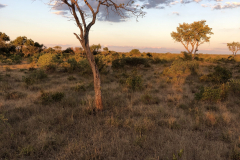 Sundset, Cawston Wildlife Estate - Zimbabwe