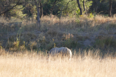 Big Grey,  - Somewhere in Africa